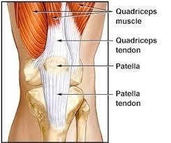 Patellar Tendinopathy Physical Therapy For Patellar Tendinitis